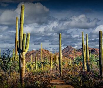 RS Perry Adventure Novel in the Sonoran Deserrt