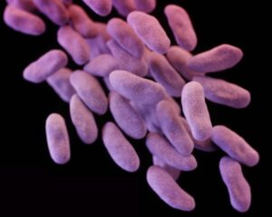 Carbapenem-resistant Enterobacteriaceae (CRE bacteria) in RS Perry aventure book Off The Edge is pictured in